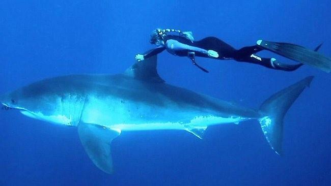 shark-rider