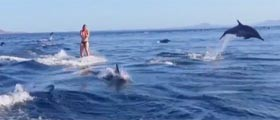 wakeboarding_with_dolphins