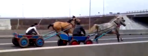 kone na rumunskej dialnici