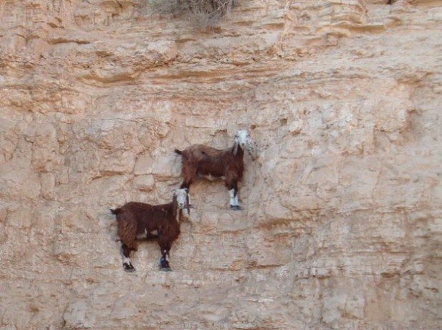 extrem kozy 1