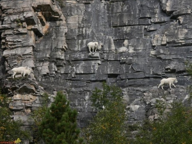 extrem kozy 5