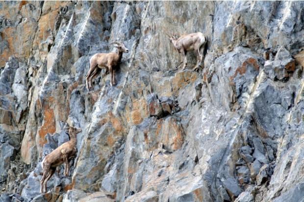 extreme kozy 9